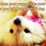 Cute Dog Best Friend Quotes Tumblr