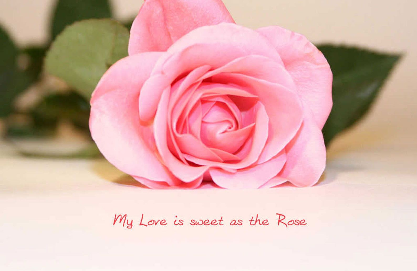 Quotes About Flowers And Love