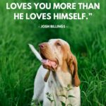 Amazing Dog Quotes Pinterest