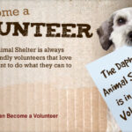 Animal Shelter Volunteer Quotes
