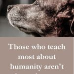 Cute And Beautiful Dog Love Quotes