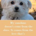 Cute Dog Love Quotes