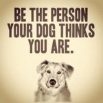 Cute Dog Lover Quotes
