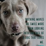 Cute Dog Quotes And Sayings Facebook