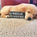 Cute Dog Quotes For Instagram