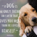 Cute Dog and Best Friend Quotes