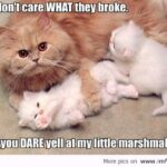 Cute Funny Animal Pictures With Quotes