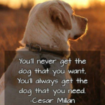Dog Best Friend Quotes Pinterest