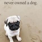 Dog Best Friend Quotes Tumblr