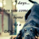 Dog Love Quotes And Sayings Twitter