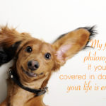 Dog Pictures With Captions Cute