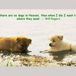 Dog Quotes For Dog Lovers