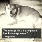 Dog Quotes Love Loyalty