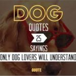 Dog Quotes Tumblr