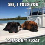 Funny Boxer Dog Pictures With Sayings Twitter