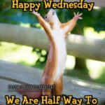 Good Morning Wednesday Funny Images
