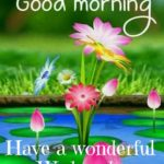 Good Morning Wishes On Wednesday