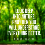 Great Quotes about Nature