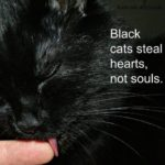 Halloween Black Cat Sayings and Quotes