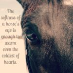 Horse Eye Quotes