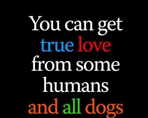 Dog Lover Picture Quotes For Facebook