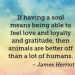 Pet Quotes by James Herriot