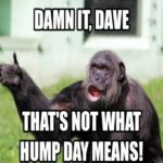Pictures Of Hump Day Wednesday
