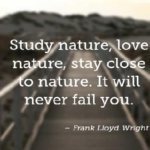 Quotes About Learning by Frank Lloyd Wright