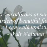 Quotes About Nature by Walt Whitman