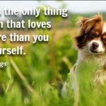 Quotes About Pet by Josh Billings