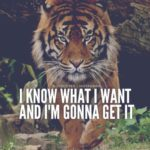 Quotes About Tigers And Life
