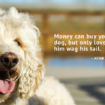 Quotes For Dog Pictures Facebook