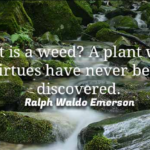 Ralph Waldo Emerson Quotes About Gardening