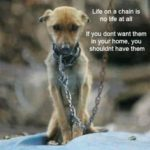 Sad Dog Quotes Tumblr
