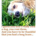 Sweet Dog Quotes
