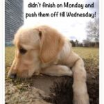 Tuesday Motivational Quotes Funny Twitter