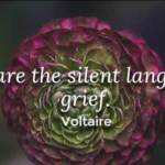 Voltaire Quotes About Sympathy